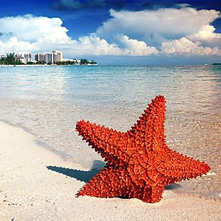 3-Night Bahamas Cruise from $379